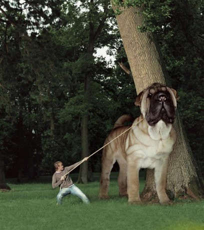 obrázky - Fotoalbum - Tapety na PC - zvířat - hodnej pejsek.jpg